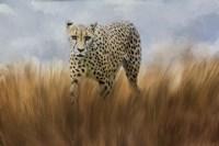 Cheetah In The Field Fine-Art Print