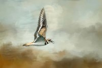 Flight Of The Killdeer Fine-Art Print