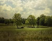 Cattle Pond In Summer Fine-Art Print