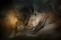 Lion Love Fine-Art Print