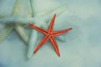 Ocean Treasures Fine-Art Print