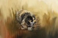 Stalking Autumn Fine-Art Print
