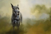 Wistful Dane Fine-Art Print