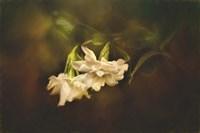 Gardenia In The Garden Fine-Art Print