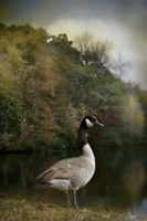 The Canadian Goose Fine-Art Print