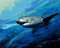The Mighty Bull Shark Fine-Art Print