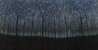 Starry Trees Fine-Art Print