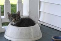 Cat in a Bowl Fine-Art Print