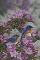 Bluebirds & Spring Blossoms Fine-Art Print