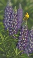 Goldfinch Lupine Fine-Art Print