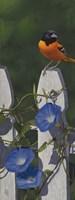 Oriole Morning Glories Fine-Art Print