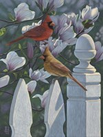 Cardinals Magnolias Fine-Art Print