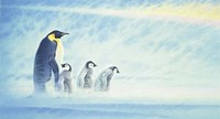 Arctic Home Fine-Art Print