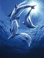 Dolphin Swing Fine-Art Print