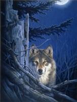 Moon Shine Fine-Art Print