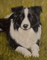 Collie Resting 2 Fine-Art Print