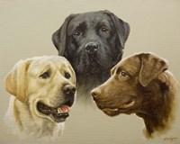 Trio Fine-Art Print