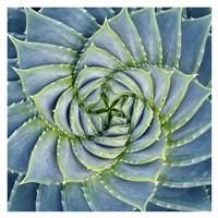 Spiral Succulent Fine-Art Print