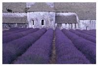 Lavender Abbey Fine-Art Print