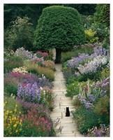 The Garden Cat Fine-Art Print