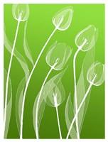 Floral 4 Fine-Art Print