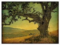 Blue Oak Hilltop Fine-Art Print