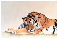Sleeping Tiger Fine-Art Print