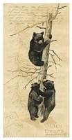 Black Bears Fine-Art Print