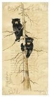 Black Bears Cubs Fine-Art Print