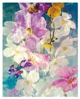 Seaborn 76 Fine-Art Print