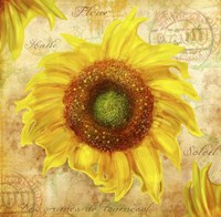 Tuscan Flower 7 Fine-Art Print