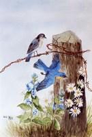Bluebirds with Daisies Fine-Art Print