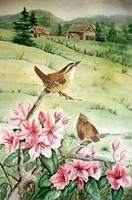 Carolina Wren Fine-Art Print