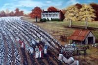 The Lincoln Cotton Field Fine-Art Print
