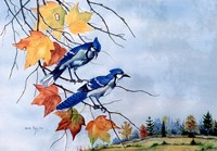Blue Jays Fine-Art Print