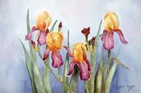 Irises Four Fine-Art Print