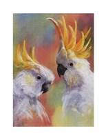 Sulphur-Crested Fine-Art Print