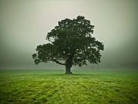 Misty Tree Fine-Art Print