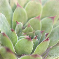 Garden Succulents I Color Fine-Art Print