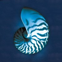 Cyanotype Sea I Fine-Art Print