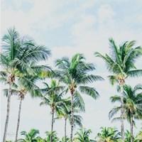 Southern Palms Fine-Art Print