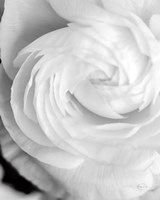 Black and White Petals I Fine-Art Print