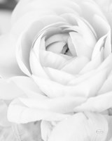 Black and White Petals III Fine-Art Print