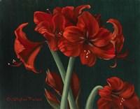 Crimson Beauties Fine-Art Print