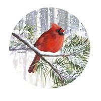 Winter Wonder Male Cardinal Fine-Art Print