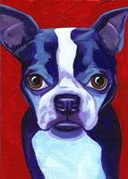 Boston Terrier Fine-Art Print