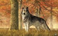 A Wolf In Autumn Fine-Art Print