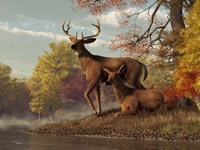 Deer On An Autumn Lakeshore Fine-Art Print