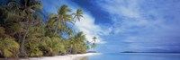 Palms Fine-Art Print