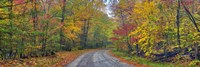 Autumn Road Fine-Art Print